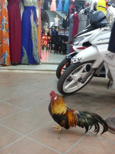 A rooster doubles as security at a local dress shop.