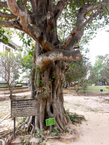 "This is called ""The Magic Tree."" It was used as a tool to hang loudspeakers playing music to cover the moans of those being executed."